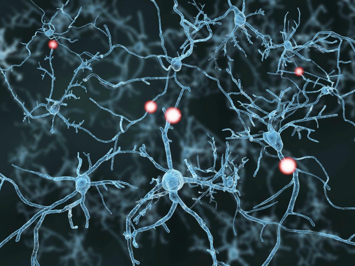 neurons3