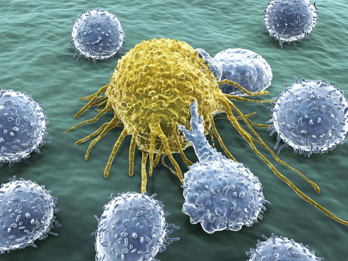 cancer-lymphocytes-lores